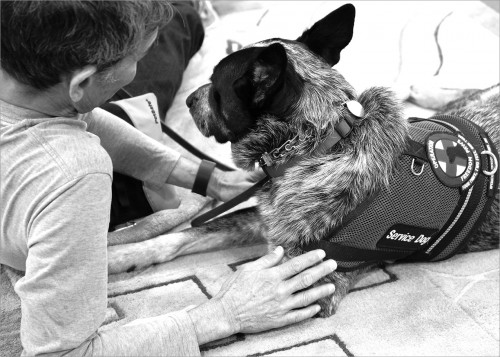 "US Army veteran Steve Loy served in the Vietnam War. He was ""welcomed home"" to jeers and name calling, like so many other Vietnam Vets. For years he lived with post-traumatic stress and ailments from Agent Orange before being diagnosed. His service dog Merlin and their partnership has been life changing."