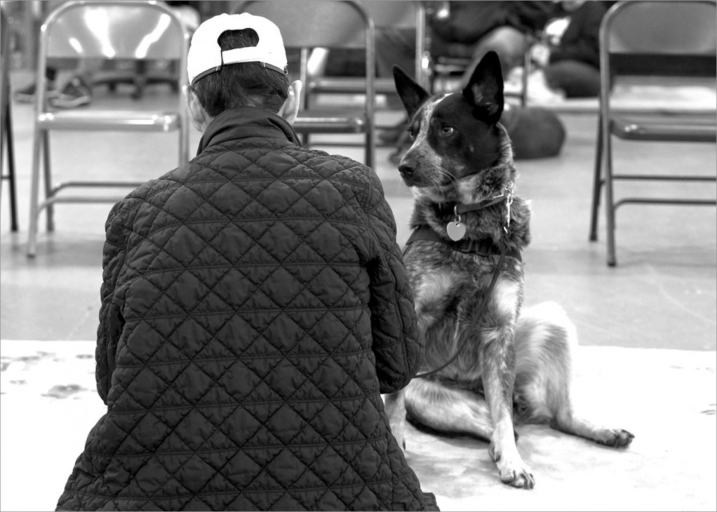 Service dog Merlin is attentive 24/7 to Vietnam War veteran Steve Loy. The communication between these two is remarkable. Merlin can detect the onset of night terrors and will awaken Steve with a soft howl or a lick to the face usually before the nightmare begins.